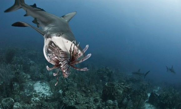 10 Monstrous Freshwater Fish Species  Toptenznet