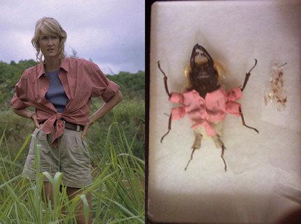 Giant Atlas Beetle Dried Giant Beetles We...