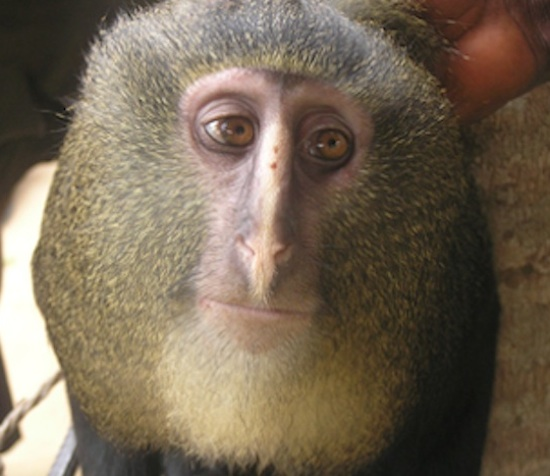 monkey looking at itself in a mirror - YouTube