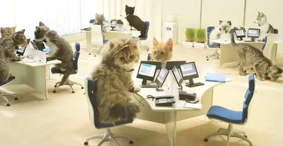 CatsWorking.jpg