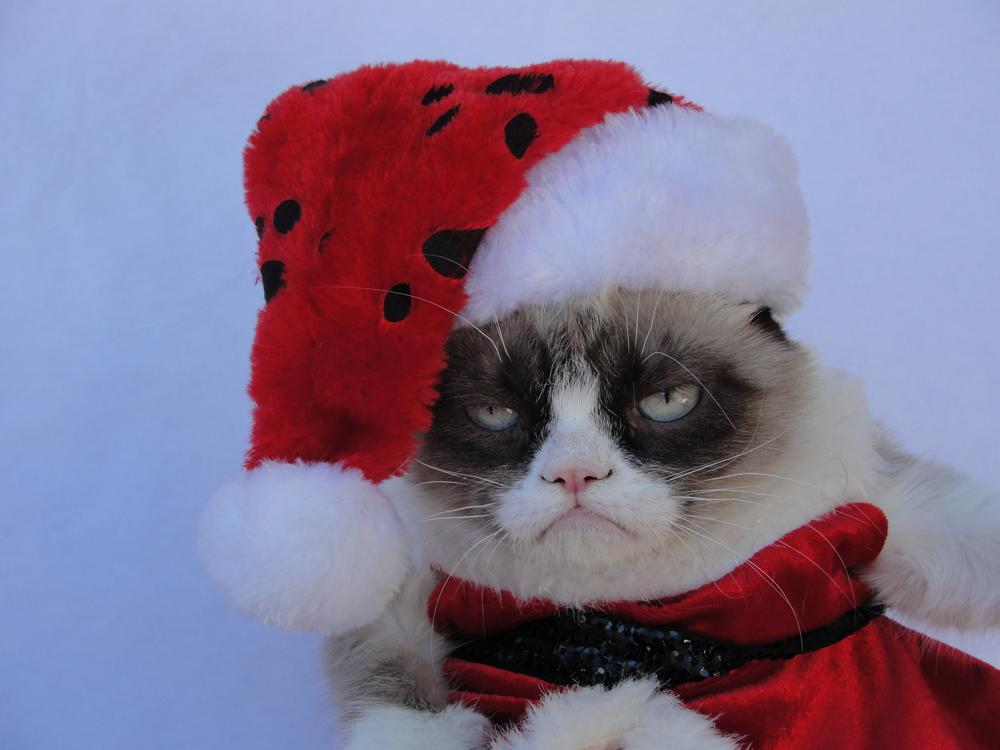 Картинки новогоднее настроение прикольные, розы букет мерцающие