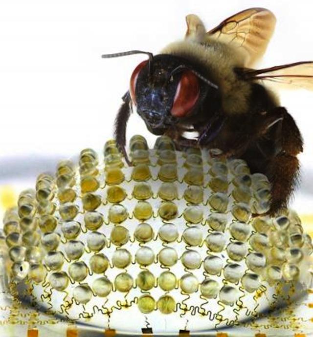 Bug Eye Lens