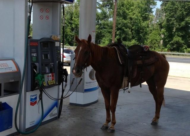 Gas Horse