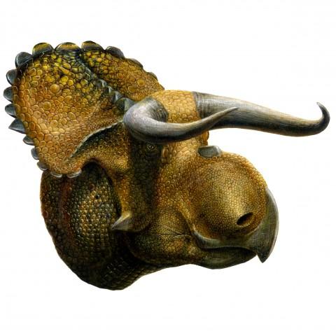 Nasutoceratops titusi by Lukas Panzarin