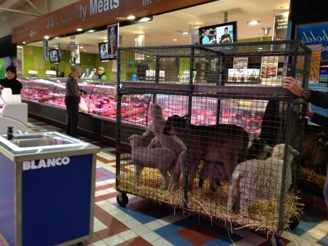 pettingzoomarket