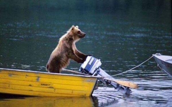 bear boat