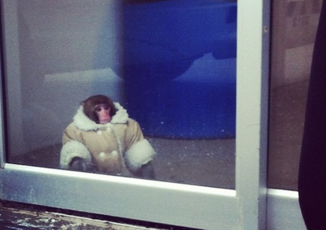 IKEA-Monkey