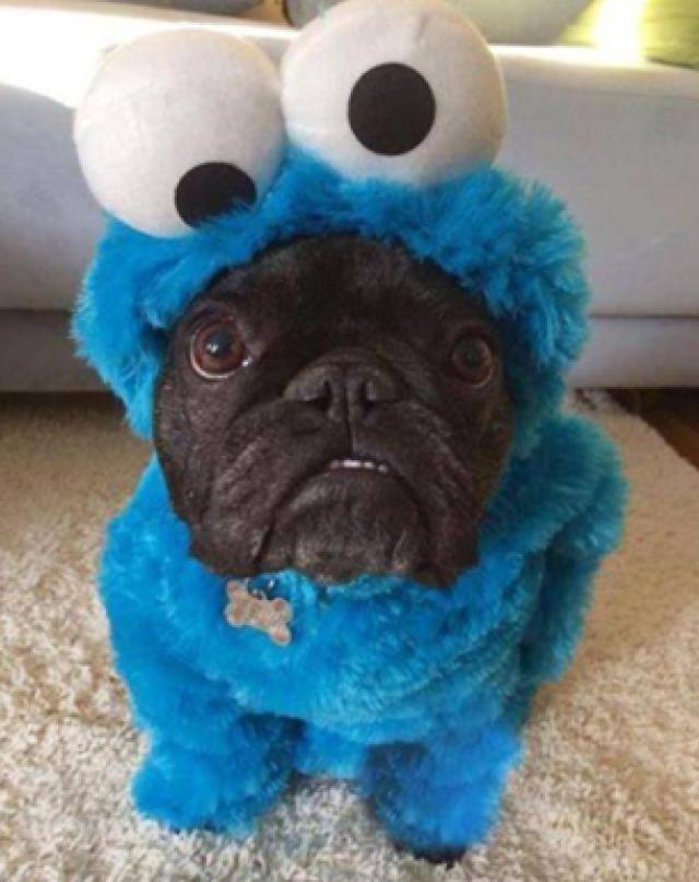 CookiePug