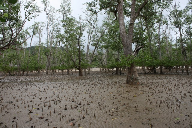 Malaysia Swamp