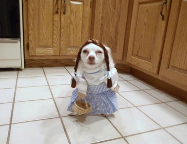 Dogothy