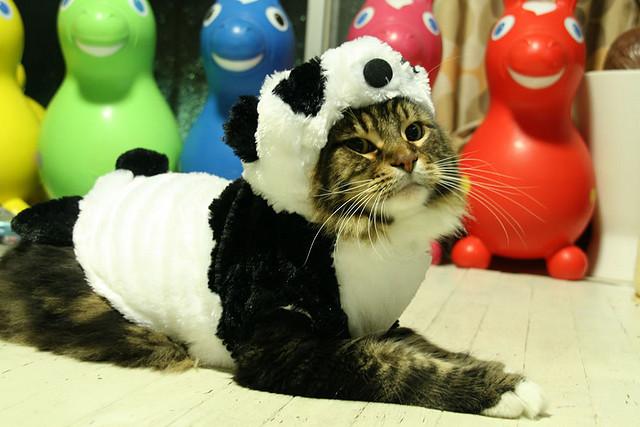 pandacat1