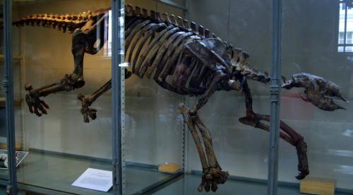 slothbones1