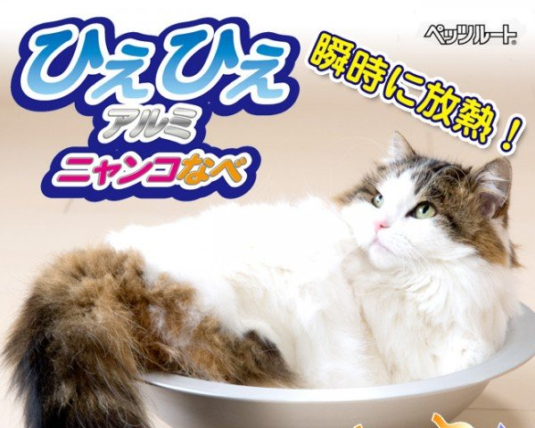 kittcatbowl7