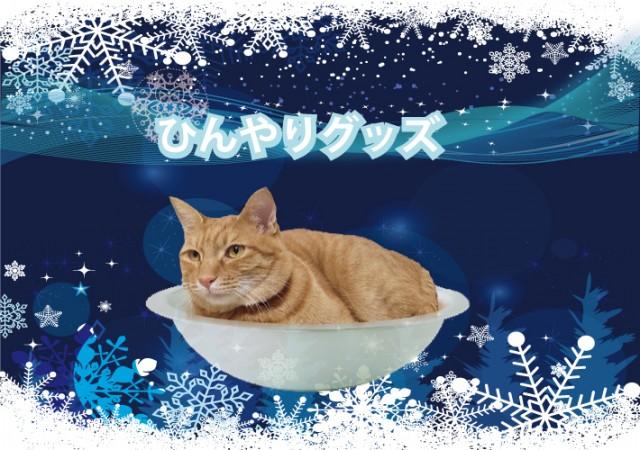 kittycatpot3