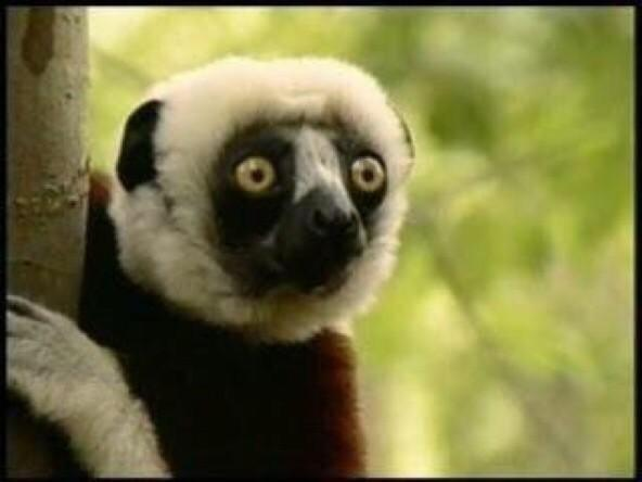 Jovian, Lemur Star Of Zoboomafoo, Dead At 20   The Mary Sue Zoboomafoo