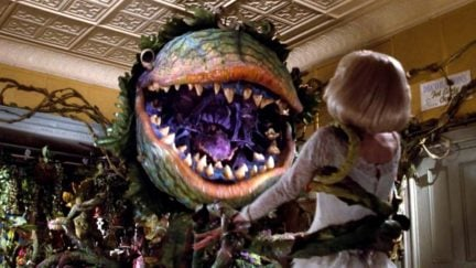 Audrey 2 in little shop of horrors