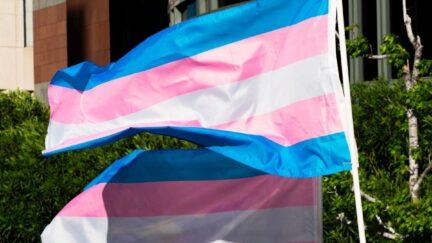 Transgender flags fluttering in the wind at International Transgender Day of Visibility.
