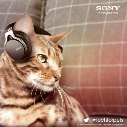 sony-cat-headphones