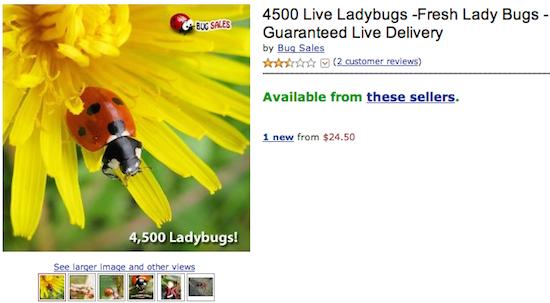 4500 Live Ladybugs
