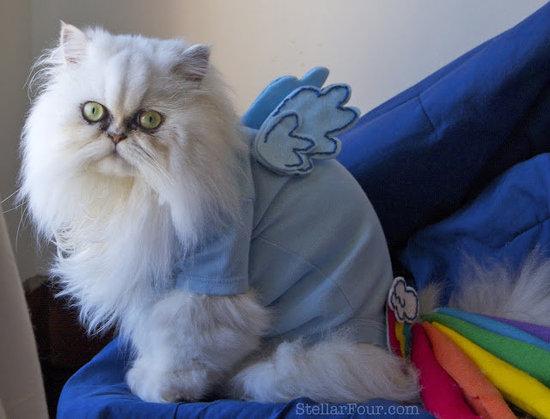 Cat Rainbow Dash