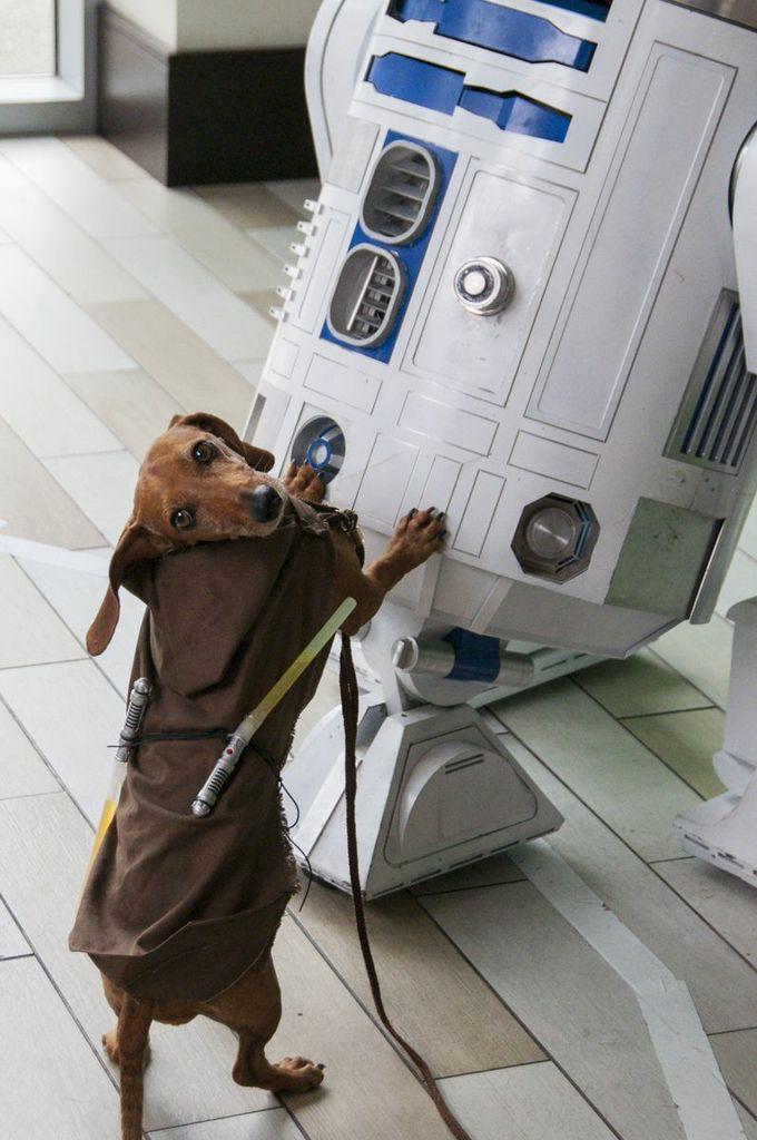 And finally... a Dachshund Jedi