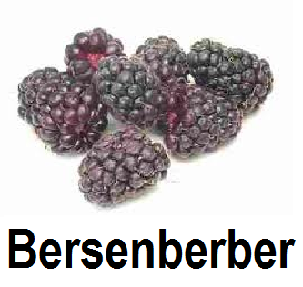 Bersenberber